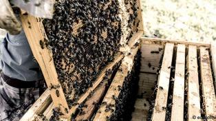 Por las contingencias del clima, declararon la emergencia apícola