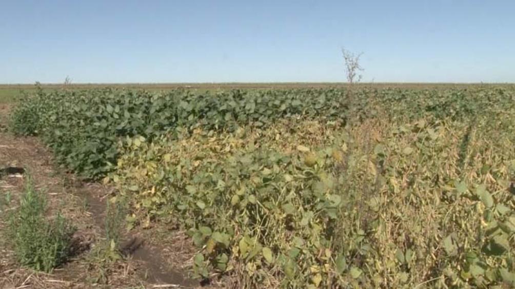 Prácticas de conservación de suelos para evitar la erosión y la pérdida de nutrientes.