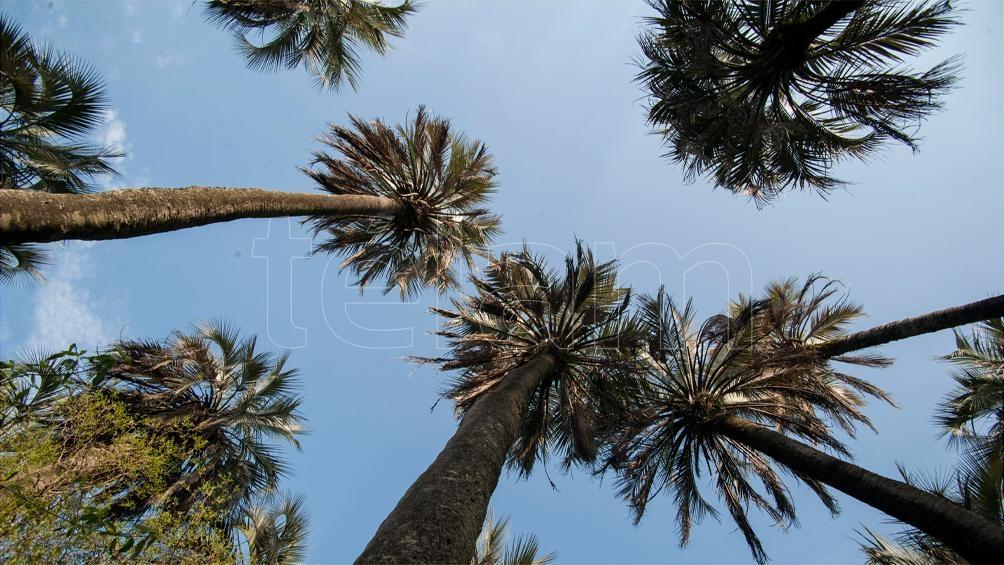 En las 17.000 hectáreas de Mburucuyá están más de la mitad de las especies vegetales de la provincia.