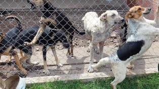 """Consideran """"un paso enorme"""" la aprobación del dictamen que penaliza el maltrato animal"""