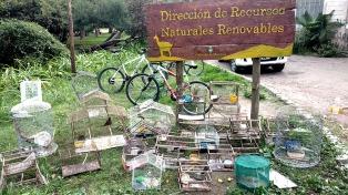 Rescataron a 80 ejemplares de aves protegidas que eran vendidas