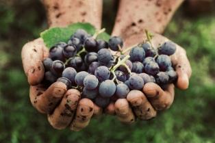 La ruta del vino argentino, del carlón a la alta gama