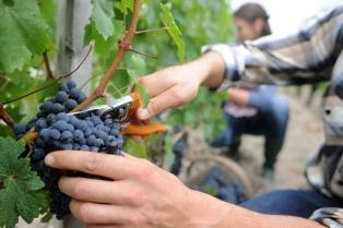 Alientan la llegada de trabajadores temporarios para las cosechas de Mendoza