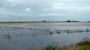 Alerta y evacuados por la crecida del río Paraná