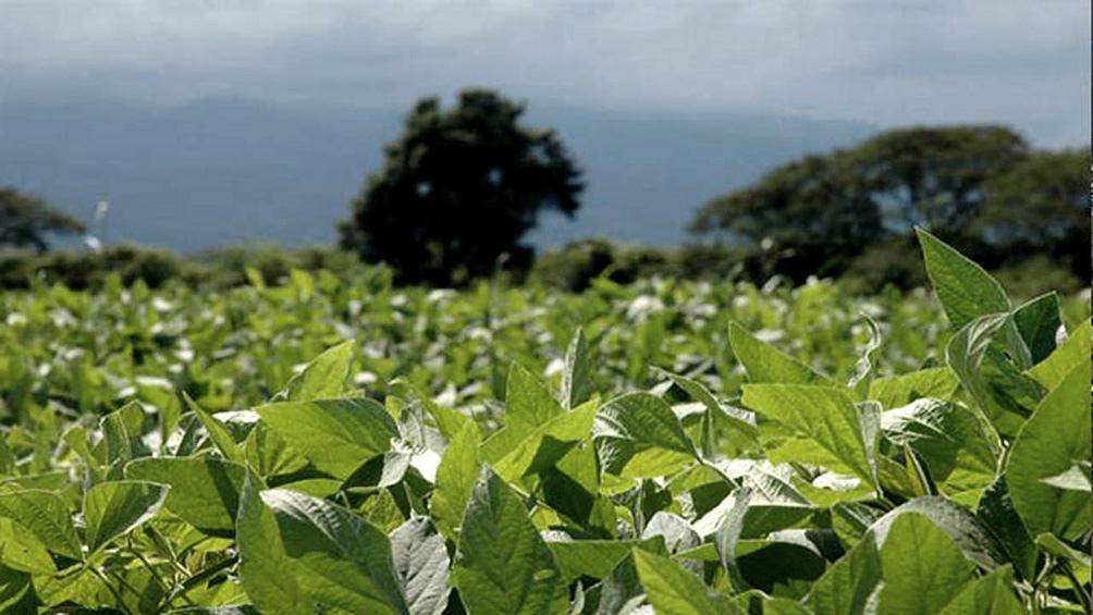"""""""Con la soja arriba de US$ 430 la tonelada, se hace muy rentable la inversión en fertilizantes"""", explican en el sector."""