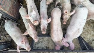 Especialistas afirman que el 80% de las últimas crisis sanitarias fueron por virus de animales