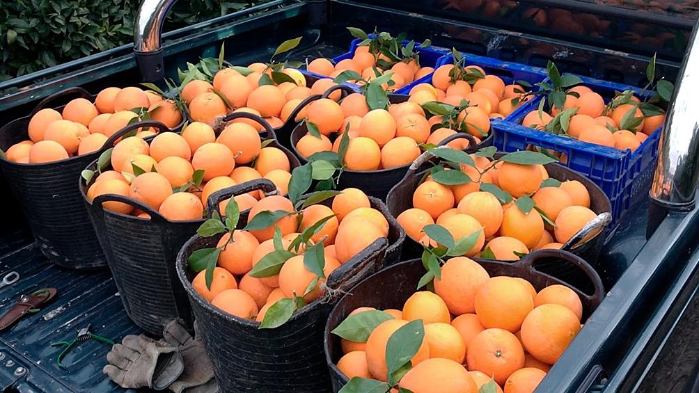 Las naranjas, uno de los principales productos de exportación del rubro.