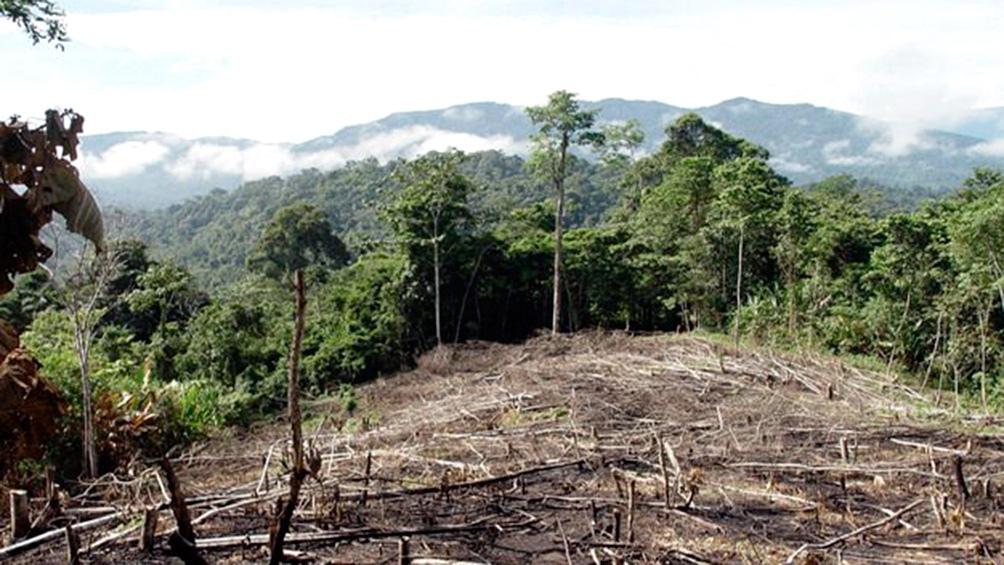 """Jair Bolsonaro se comprometió recientemente a """"eliminar la deforestación ilegal de Brasil en 2030""""."""