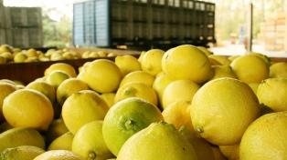El inicio de exportaciones de limones a China genera gran expectativa