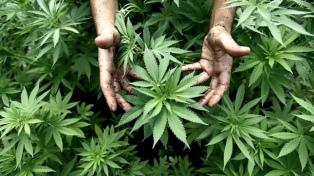 La provincia y el INTA firmaron un acuerdo para la producción de cannabis sativa con fines medicinales