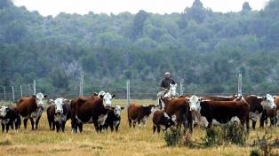 Comenzó la Fiesta del Ternero Cordillerano en Trevelín