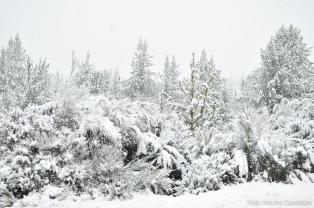 Paraíso blanco