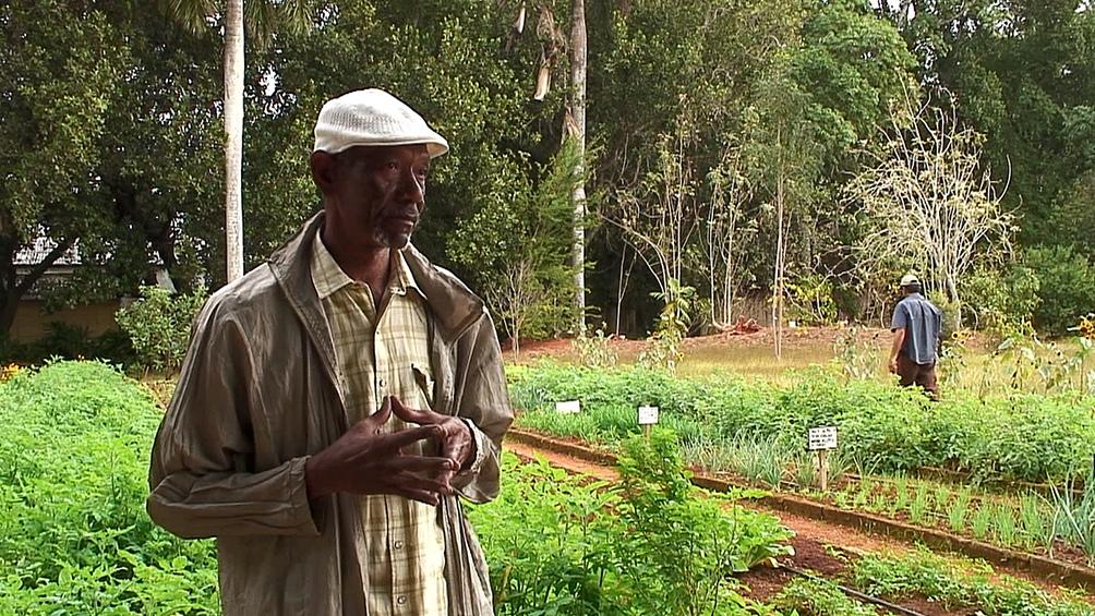 Cuba promovió la agroecología para lograr el autoabastecimiento.