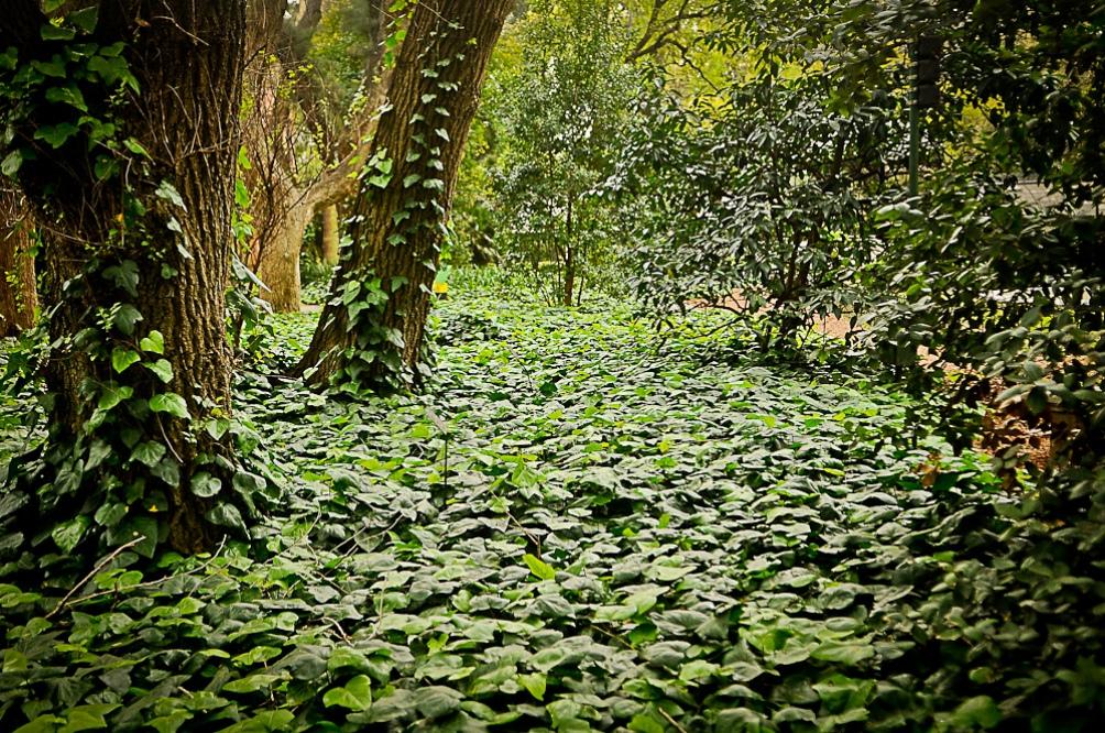 Para vivir la experiencia se debe contar con auriculares y descargar la aplicación Jardín Sonoro Vol. 2 en el celular.