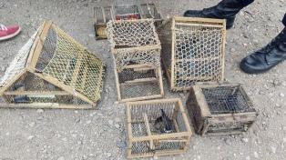 Se rescataron cerca de 800 aves silvestres en lo que va del año