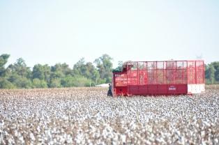 La siembra de algodón en Chaco puede superar las 140.000 hectáreas, según el gobierno provincial