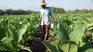 Descuentos del 25% en la compra de insumos para pequeños tabacaleros