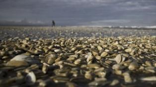 Amplían la zona de veda para la pesca de moluscos en la costa atlántica bonaerense
