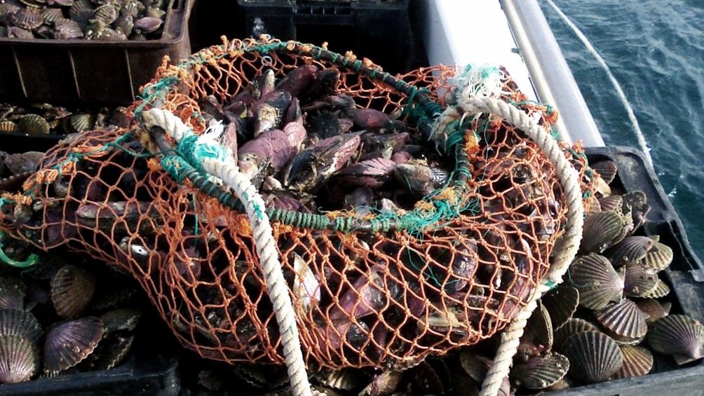 Elevan las multas contra la pesca ilegal en el mar argentino