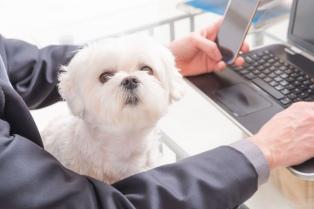 Cuidadores a domicilio y familias anfitrionas, entre las nuevas tendencias para mascotas