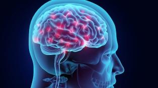 Presentaron un estudio sobre los efectos de las sustancias psicodélicas en el cerebro