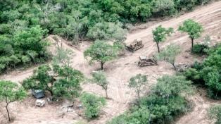 La pandemia no frenó el desmonte y durante el aislamiento desaparecieron 21 mil hectáreas de bosques