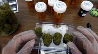 La provincia adhirió a la ley del uso del cannabis medicinal