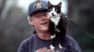 Socks, el felino que logró que el gato tenga su día mundial