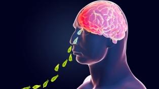"""Cuáles son los síntomas y cómo ataca la """"ameba come cerebros"""""""