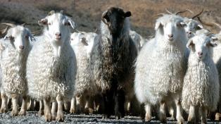 La Mesa Ovina Nacional proyecta aumentar la producción de carne 66% y el rodeo 22% para 2030