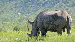 Murió en África el último ejemplar del rinoceronte macho blanco