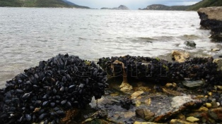 El Parque Nacional Tierra del Fuego sigue de temporada en otoño