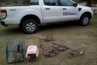 Multan con 100 mil pesos a detenidos por infringir el tráfico de aves