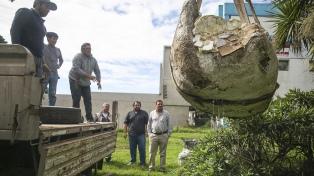 Trasladaron al gliptodonte hallado en Sierra de los Padres a un museo de Mar del Plata