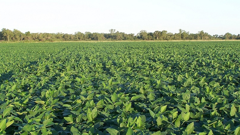 Desde principios de año la soja y el maíz acumulan subas de más de US$ 100
