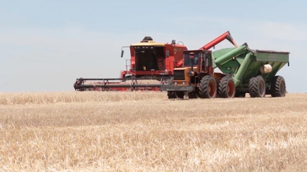 Los incentivos comerciales acompañaron la adopción de lo que es la práctica más eficiente: la rotación de cultivos
