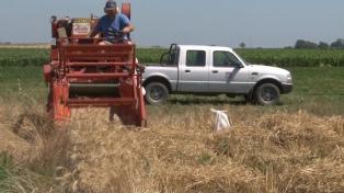 La cosecha de trigo alcanzará el récord de 19,5 millones de toneladas