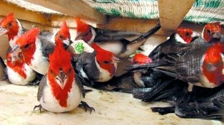 En un operativo, rescataron 94 aves y tortugas y secuestraron armas