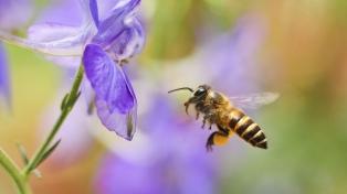 Las abejas demostraron que pueden sumar y restar, según un estudio científico