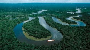 Descubren al menos 36 nuevas especies de flora y fauna en el Amazonas