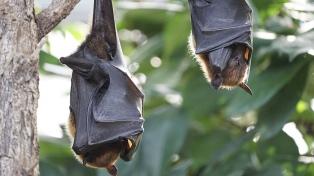 Argentina avanza en la designación de áreas de protección para la conservación de murciélagos