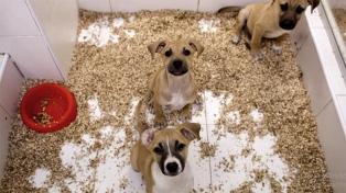 La Plata tendrá un Instituto de Derecho Animal