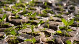 Plantarán un árbol por cada nacimiento para concientizar sobre el cuidado ambiental