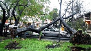 Mar del Plata: caída de árboles y cortes de luz tras tormentas y fuertes vientos