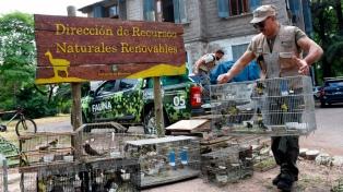Liberaron más de 50 aves recuperadas de la venta ilegal en la cordillera