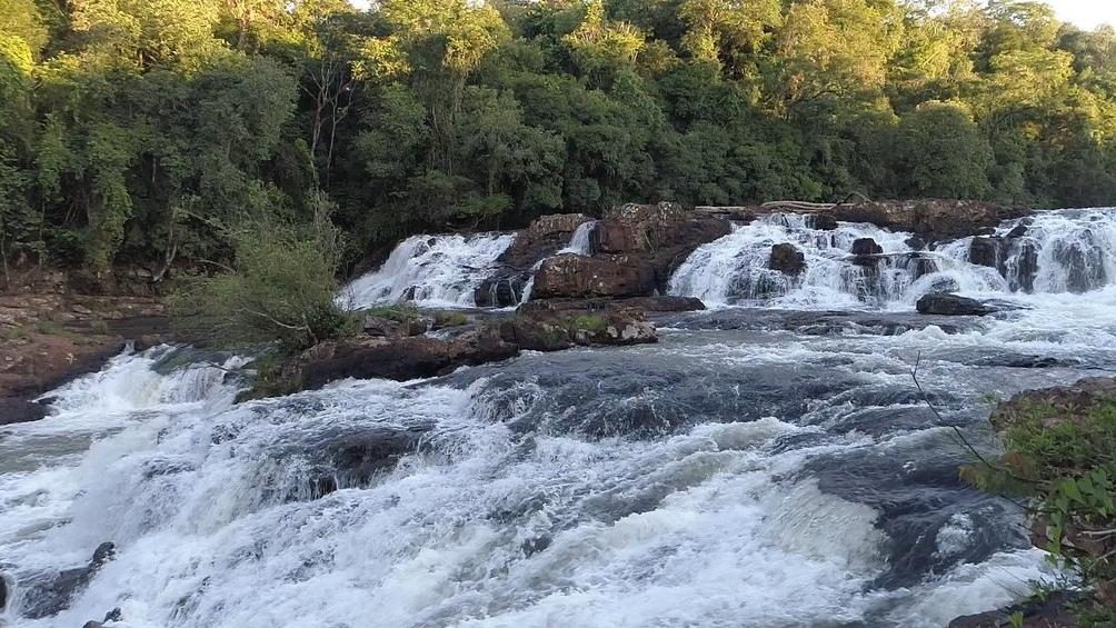 Uno de los proyectos argentinos de criptomonedas busca preservar la selva misionera.