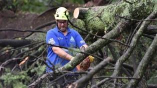Cesa el alerta y remueven los árboles caídos durante el temporal
