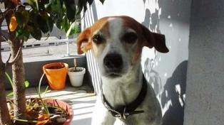 Aseguran que las mascotas incrementan su ansiedad al modificarse sus rutinas