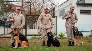Pasan a retiro a tres perros detectores de drogas