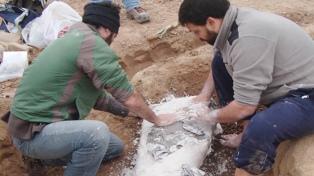 Reconstruyeron un mar prehistórico que cubrió parte de Buenos Aires hace más de 70 mil años